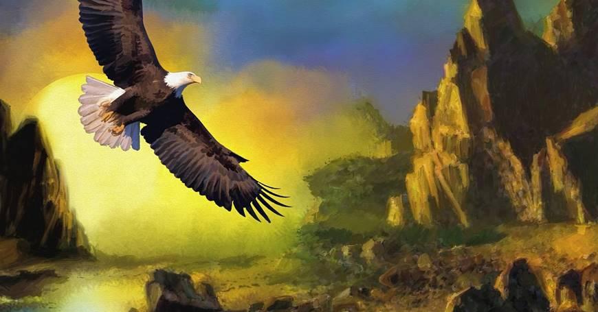 Slika orla u letu i prirode